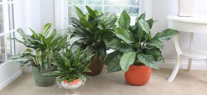 NASA-Approved Plants Will Improve the Air Quality in Your Home