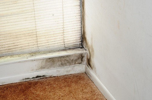 mold in a home