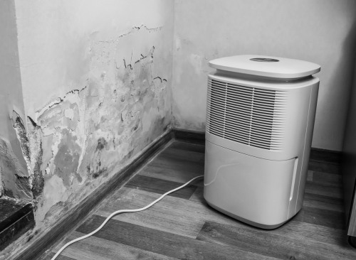 will a dehumidifier get rid of mold
